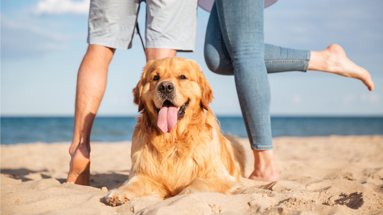 砂浜で犬の散歩をするカップル