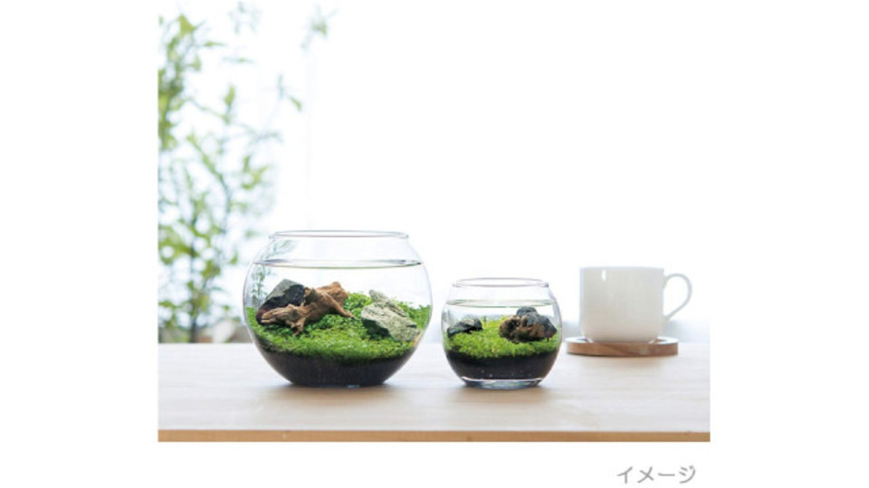 Photo of Healed by the water view of the glass bowl …! Aquatic aquarium kit that can be started with this