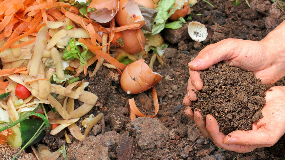 Photo of How to make homemade compost that can be lived in an apartment and dislike insects