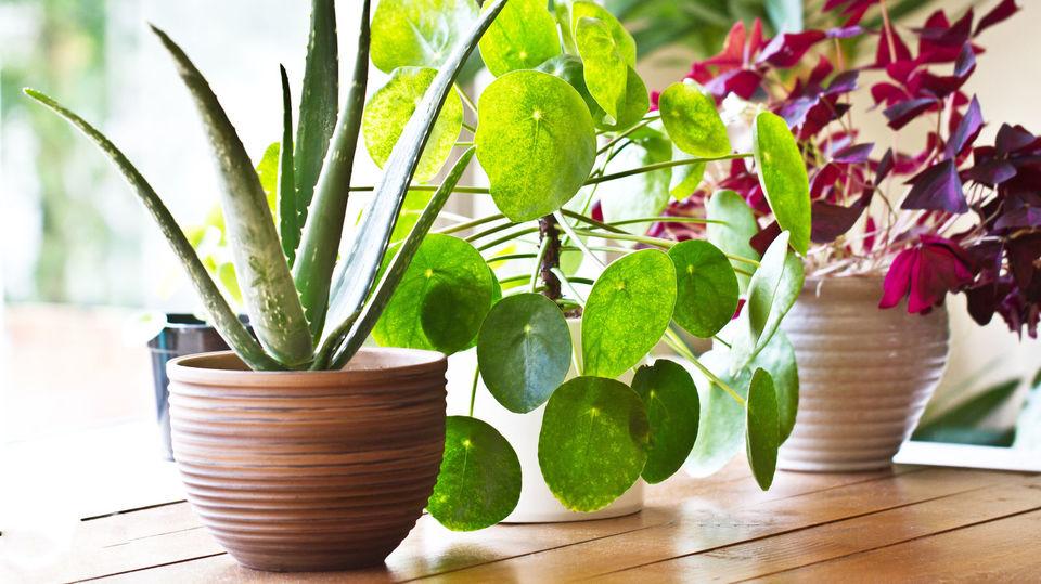 観葉植物をうまく育てるための基本知識 初心者が育てやすい種類は?
