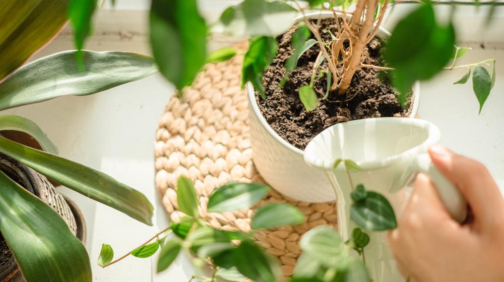植物に水やりをする