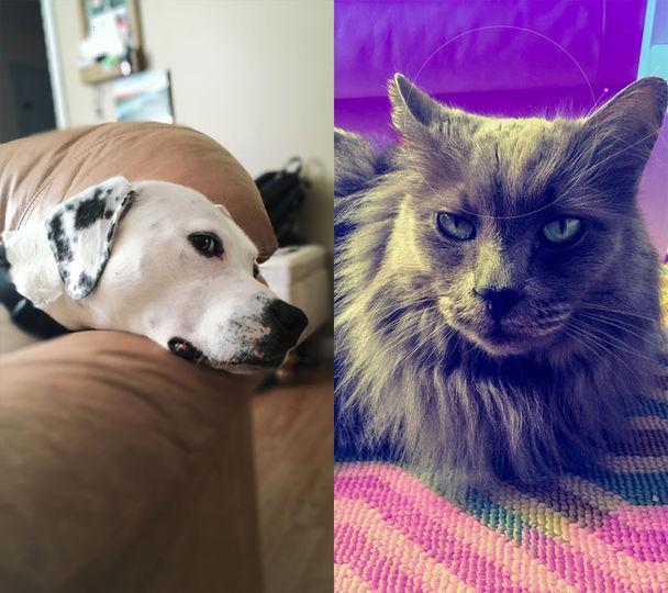 Photoshop Cameraでエフェクトをかけた犬と猫の写真
