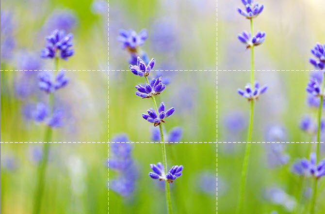 Blurred-Flowers-Background