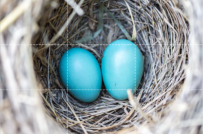 Eggs-Center-Placement