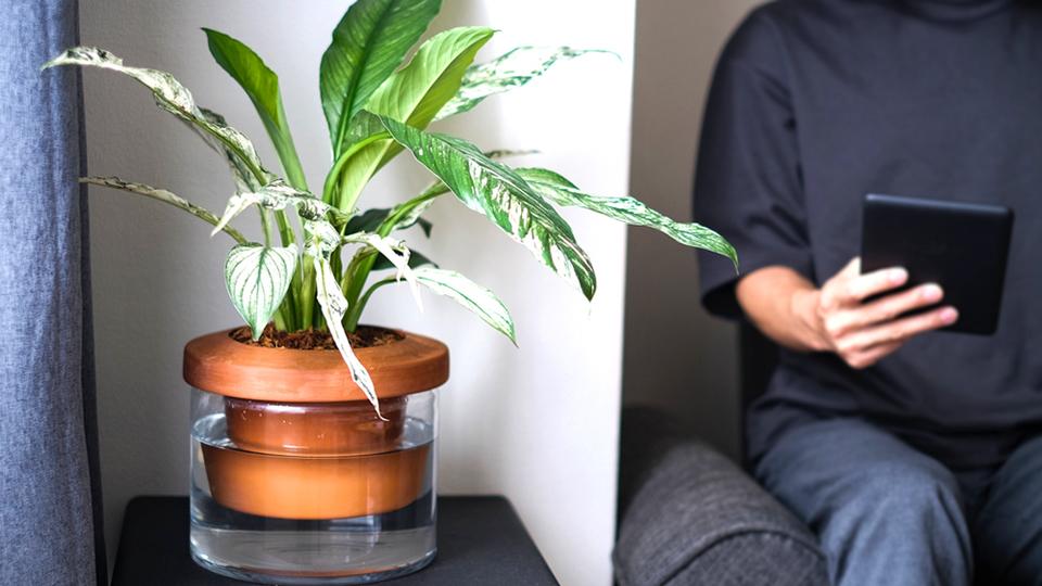 初心者でも安心!自動給水してくれる「Terra Cotcha」なら手軽に観葉植物を育てられるよ