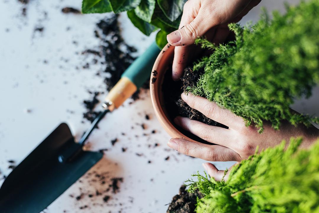鉢植えと土