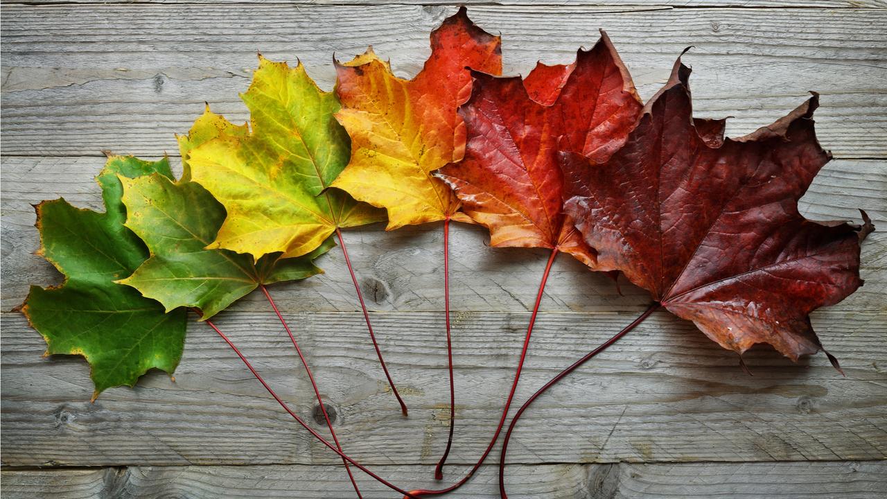 季節の移り変わりにより色が変化した葉
