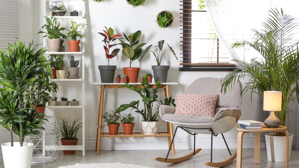 なぜ観葉植物を置くと、メンタルが整うのか? 4つの理由