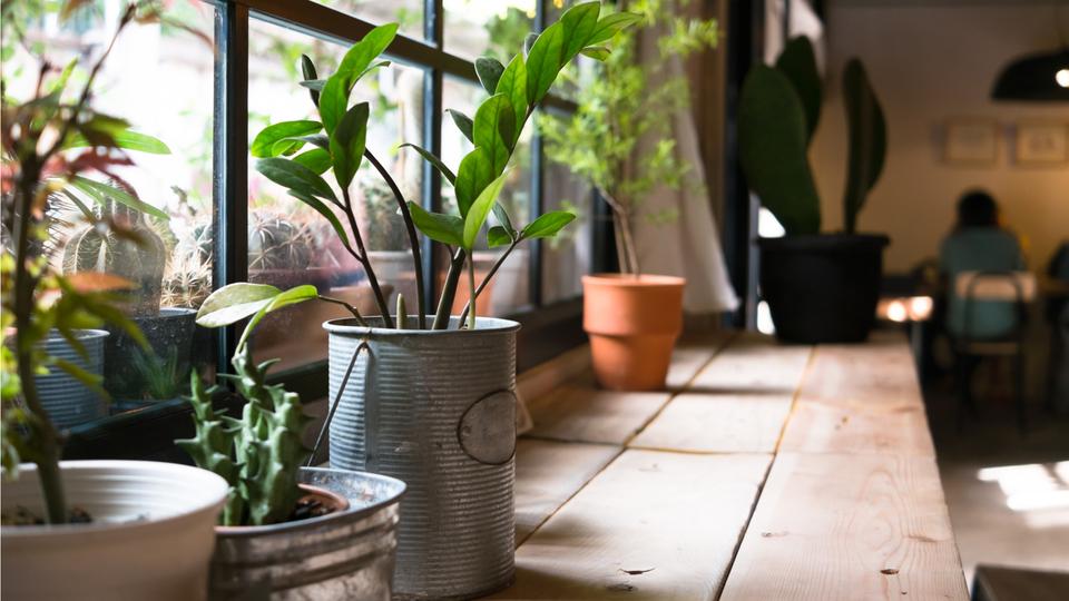植物の植え替え時期を知らせる4つのサイン