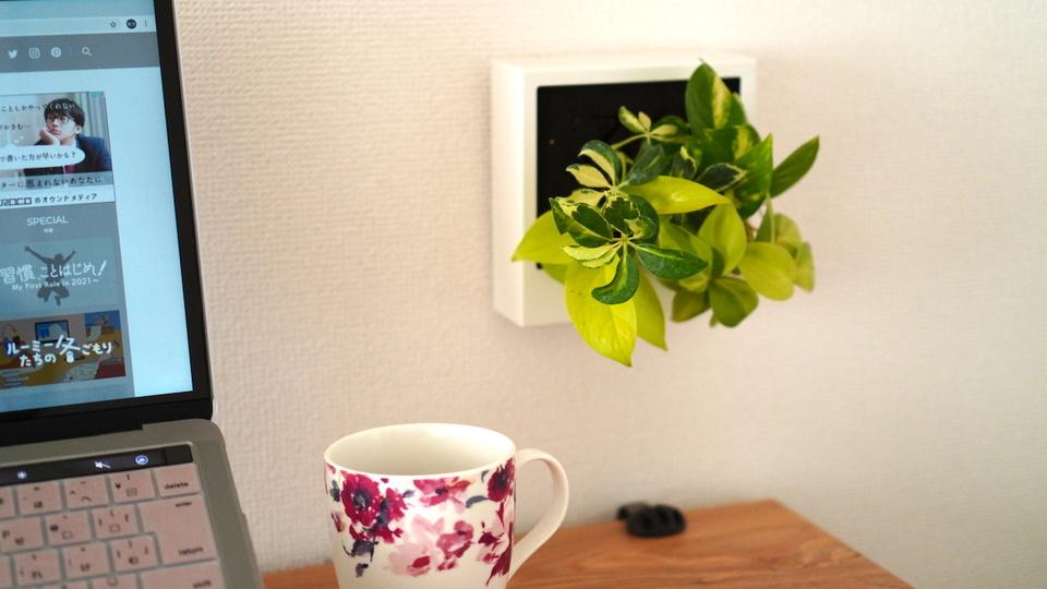 無印良品の「壁にかけられる観葉植物」は、省スペースで大きな癒しが生まれる