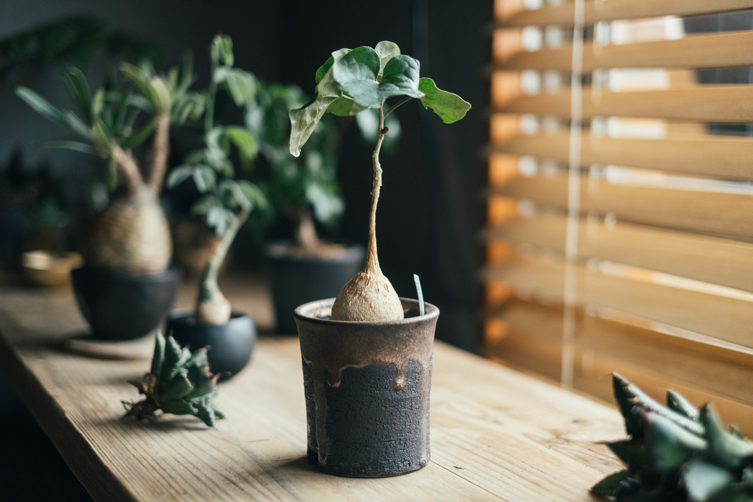 デスク横に置かれた植物