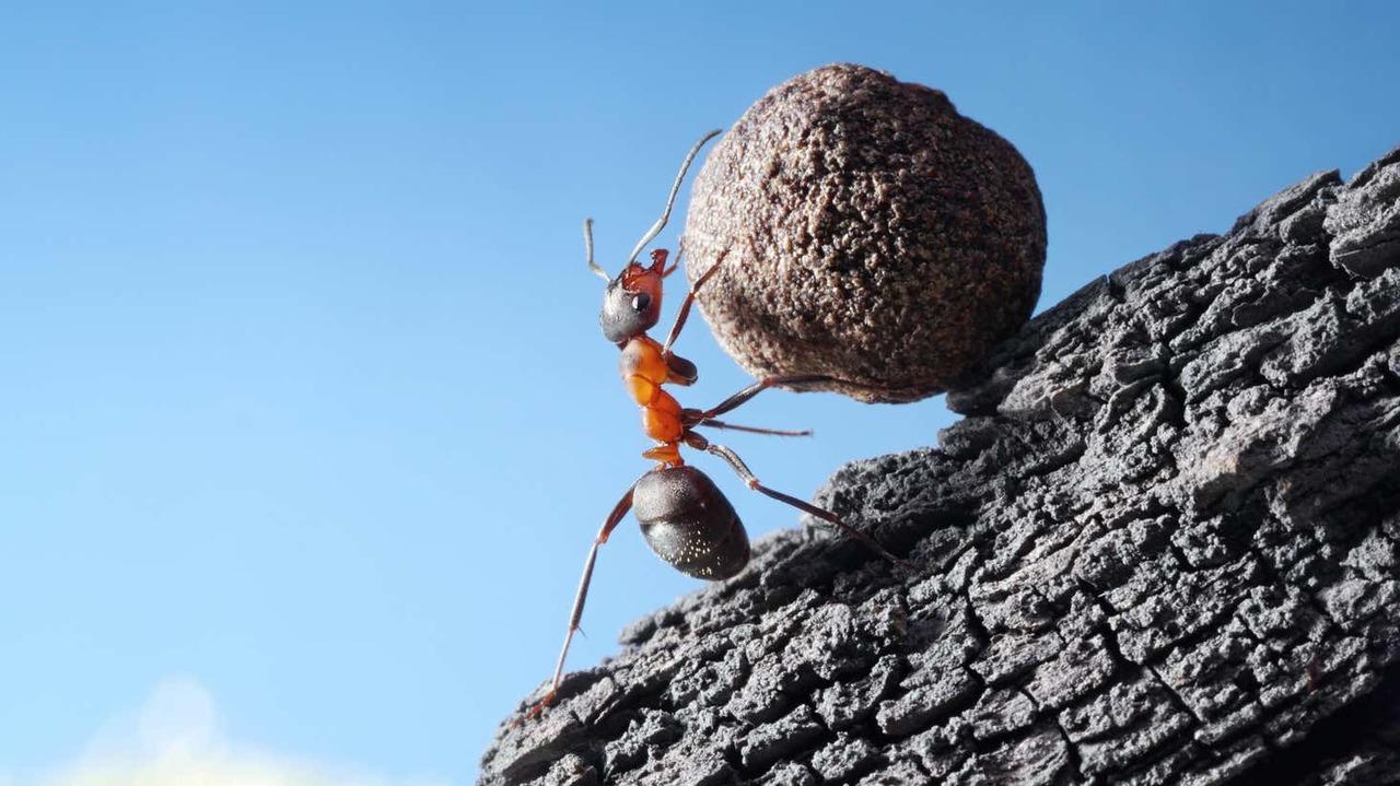 石を持ち上げようとする蟻