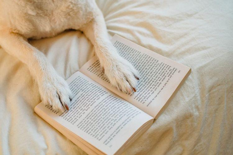 犬が手で本を開いているところ
