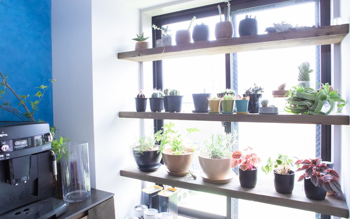 多肉植物とハーブ鉢