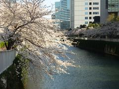 花よりパン! 目黒川のお花見がもっと楽しくなるおすすめパン屋さん
