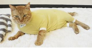 地元密着で生まれたブランド! 伝統工芸品から猫の術後服までのラインナップ