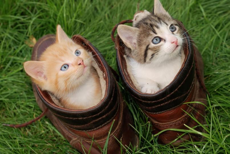 靴に入る猫