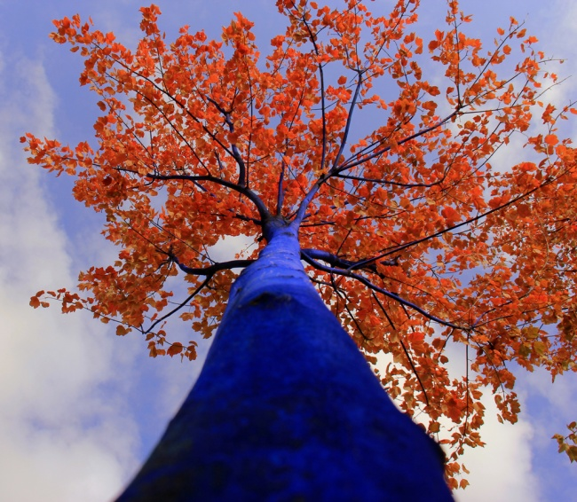 20130721.Blue-tree1.jpg