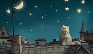 新月にしたいこと、満月に気をつけたいこと