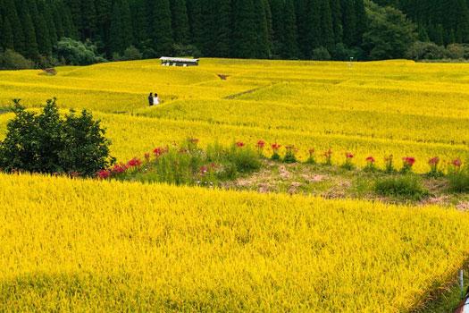 201511021_sakamototanada_3.jpg