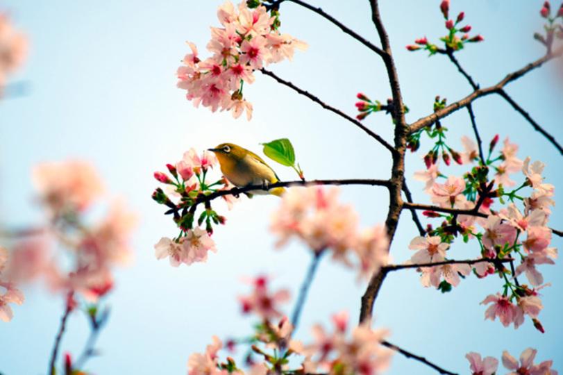 3月21日は春分。新月の力をうけ...