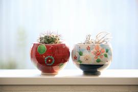 なんでもない植物がパッと華やぐ「和の器」
