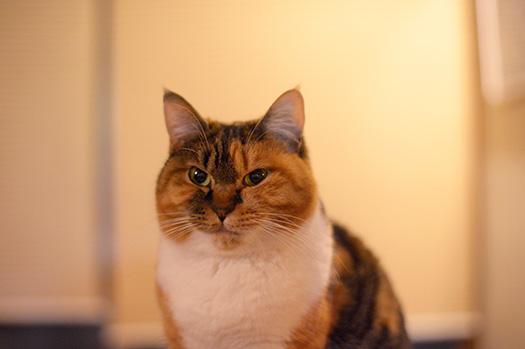20160126_cat_miku.jpg