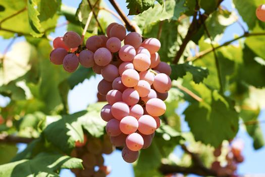 160309_marche_wine02.jpg