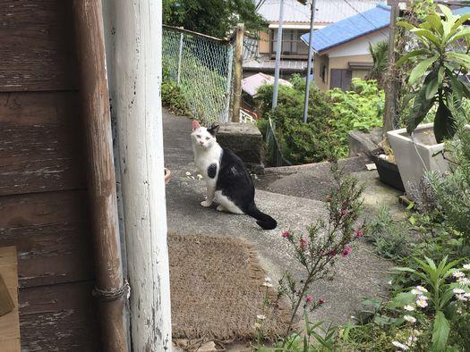 160517_zushineko_2.jpg