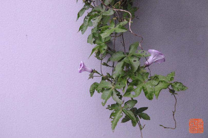 七色のさきの光までも。「紫」を楽しむ