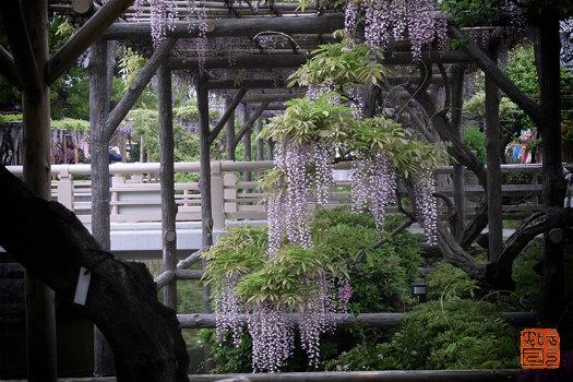 20160513_purple3.jpg