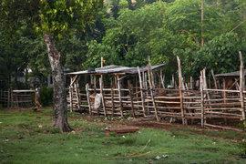 自然の力に助けてもらいながら。ココナッツオイルの伝統的な作り方レポート(3)