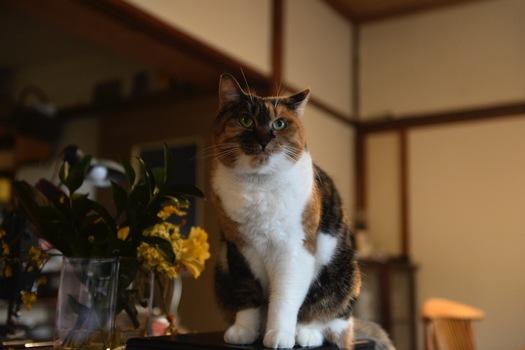 170101_zushineko_2.jpg