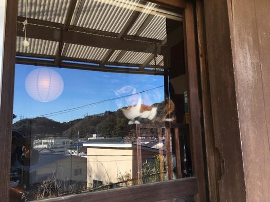 170304_zushineko_4.jpg