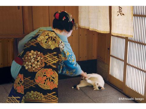 たまにはネコ目線で見てみる。京都の魅力を再発見できる写真展