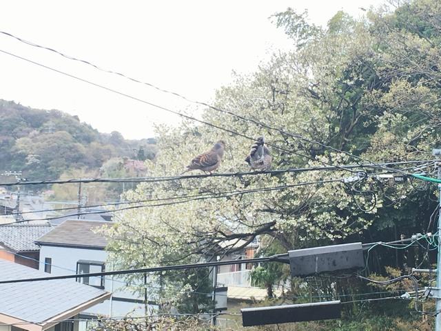 170416_zushineko_4.jpg
