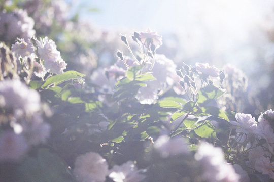 父への思いを綴る個展「蜷川実花 うつくしい日々」写真展