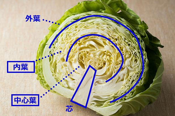 170508_fuwafuwa_cabbage_01.jpg