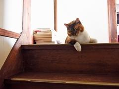またもや猫軍団は留守番に #逗子猫日記