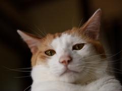 朝の接近が彼の日課 #逗子猫日記
