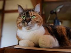 「逗子猫堂」として鎌倉ブックカーニバルに参加 #逗子猫日記