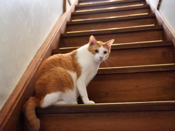 脱走して久しぶりの外を満喫 #逗子猫日記