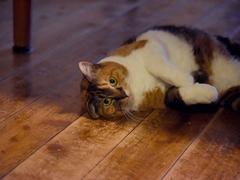 ジメジメした日は猫軍団も大人しい #逗子猫日記