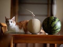 お土産にいただいた長井の名産 #逗子猫日記