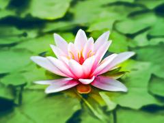 インドのヨガの大家に教わった「時短瞑想」