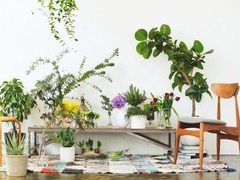 花や草木のやさしさにふれる「ボタニカルマーケット」が開催