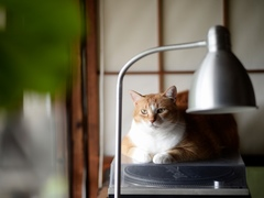 落ち着きのない世の中、この佇まいは忘れないようにしたい #逗子猫日記