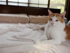 自分の場所と思っている #逗子猫日記