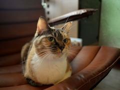 そういう時も顔にでるから猫は面白い #逗子猫日記
