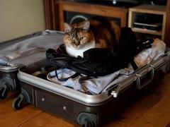 皆既日食を撮影するためにアメリカへ #逗子猫日記